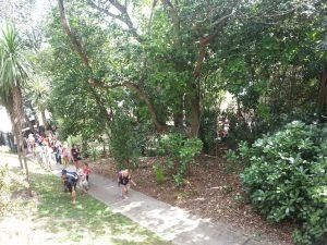 Opening of the Grey lynn School forest