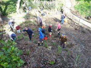 Waipapa planting day July 2015