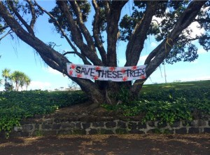 Save these trees