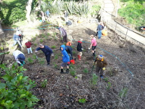 Waipapa planting day July 2015