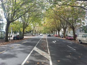 Franklin Road street trees